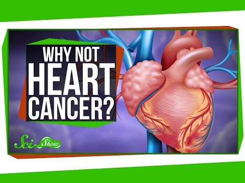 Why Is Heart Cancer So Rare?