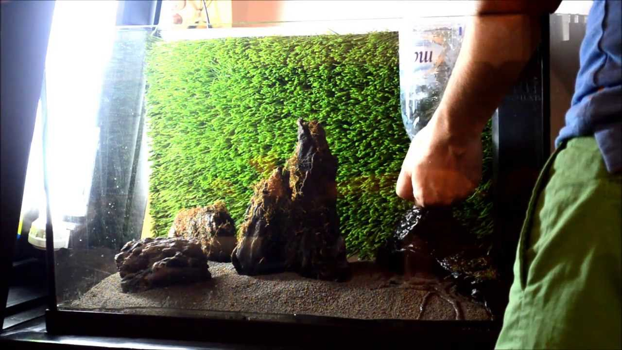 10 Steps Aquascape Aquarium Set Up   Build 3   YouTube