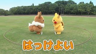 【公式】イーブイとピカチュウがガチンコ対決!勝つのはどっち?相撲編