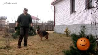 [Урок 17] Учим собаку подходить по команде КО МНЕ
