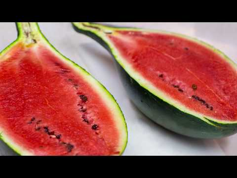 Handled Melon All final