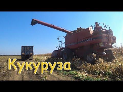 Уборка кукурузы! Case 2166