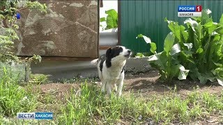 В Абакане к потерявшемуся на железной дороге ребенку полицейских привела собака. 17.07.2019