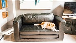 Ikea Askeby £165 sofa bed | Part 1: HONEST REVIEW