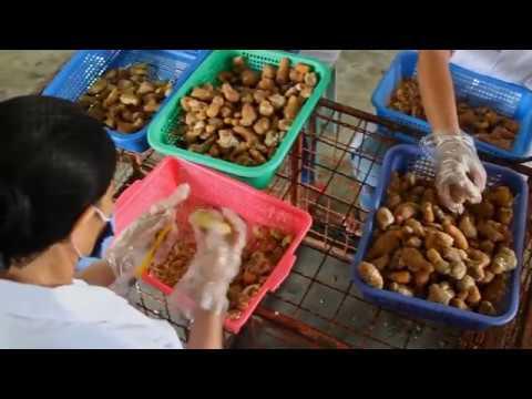 Panay Fair Trade Center (PFTC) in Iloilo, Philippines (2016)