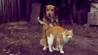 Самые лучшие видео приколы с кошками!