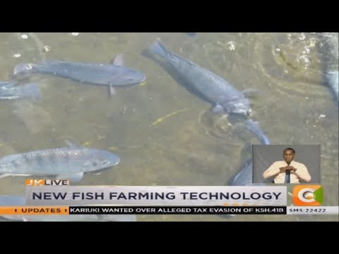 | SMART FARM | New Fish Farming Technology