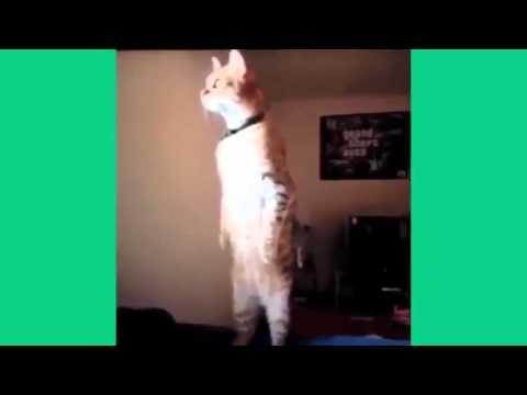 Short Funny Animals Videos Ep.14