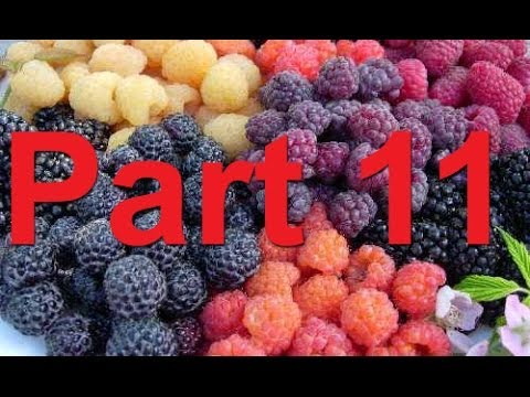 RBPW 2014, Part 11- Update on Nutrition in Caneberries