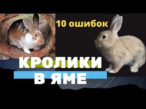 10 ошибок Кролики в яме. Кролиководство, содержание, разведение, выращивание кроликов в яме.