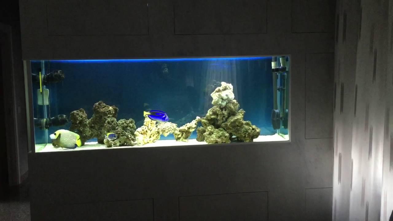 acquario marino a parete youtube