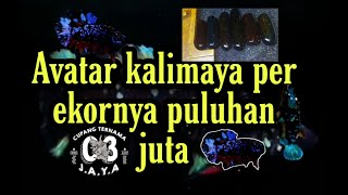 9 Daftar Avatar Kalimaya Per Ekornya Puluhan Juta Youtube