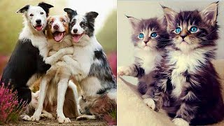 Funny Animals! Cute Funny Animals Video Compilation #25
