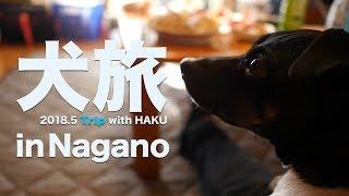 日本テリアのHAKUとGWに車で長野を旅してきました。ペット可のコテージ...
