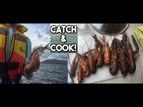 Red-Claw Catch'N'Cook Somerset Dam (FISHING TRIP)