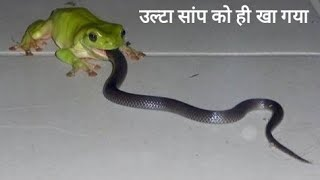 सांप vs मेंढक vs Other Animals कौन जीतेग ? । Frog vs. Snake Vs Other Animals ,Who wins?