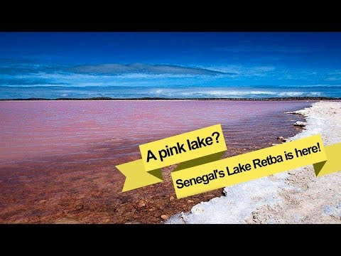 Live: A pink lake? Senegal's Lake Retba is here! 见过粉红色的湖吗?