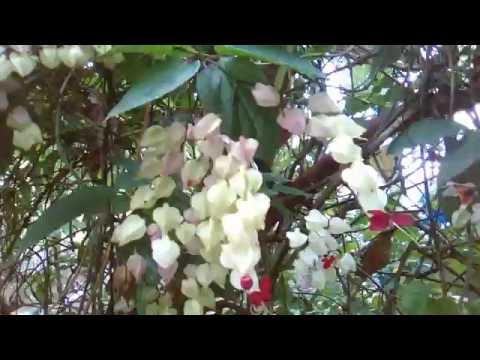 Most Beautiful Flowers In The World | Beautiful Flower |  Beautiful Nature HD