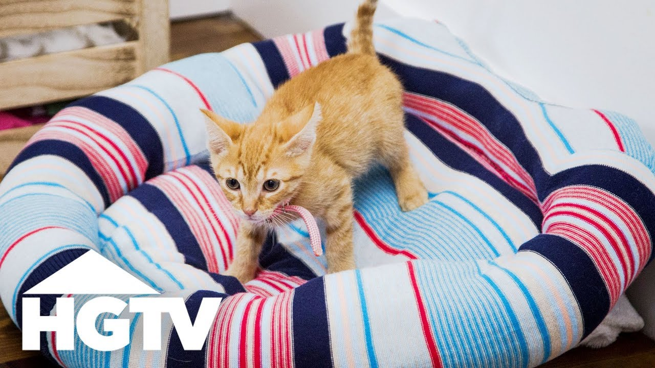 Upcycle An Old Sweater Into A Cozy Pet Bed Easy Does It Hgtv