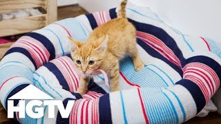 Upcycle an Old Sweater Into a Cozy Pet Bed - Easy Does It - HGTV