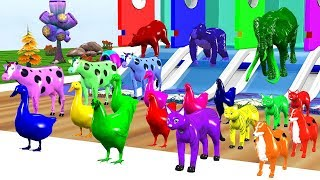 Farm Animals And Their Are Transformed Into Wild Animals At  Source - Learn Animals Names For Kids