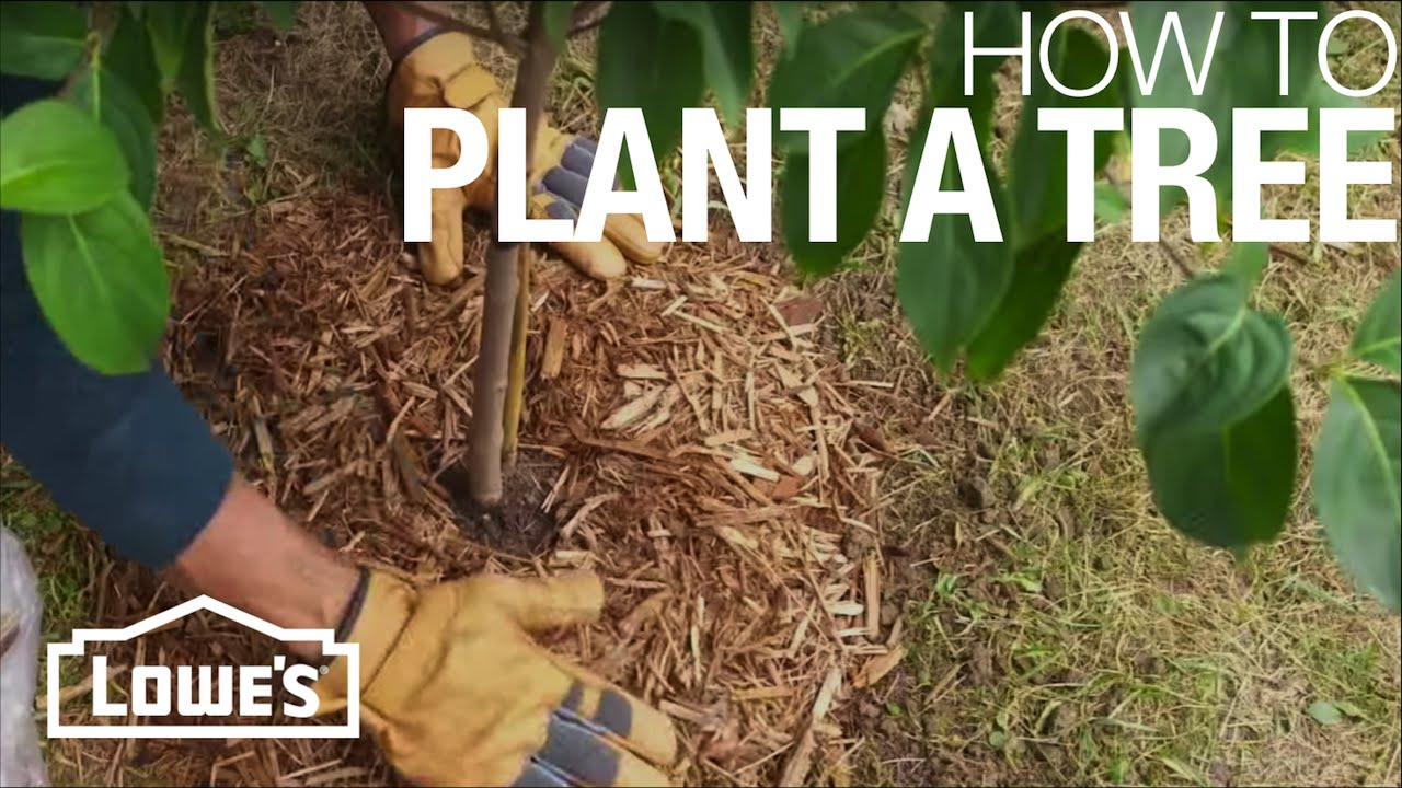 How to Plant a Tree - YouTube