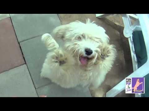 Ngộ nghĩnh clip chó nhảy Gangnam Style