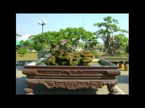 bonsai tuyen tron dac sac boi thanhvan62