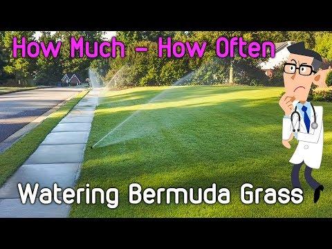 Watering Bermuda Grass Lawn