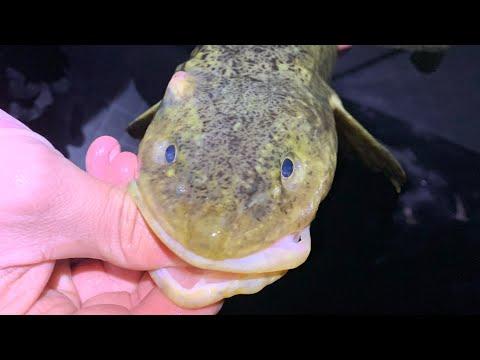 Burbot Fishing, High School Ice Fisherman, Airborne Angler; Michigan Out of Doors TV #2108