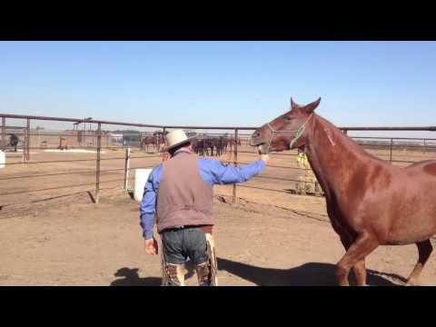Sac Sheriff Dept Launch Wild Horse Training Program
