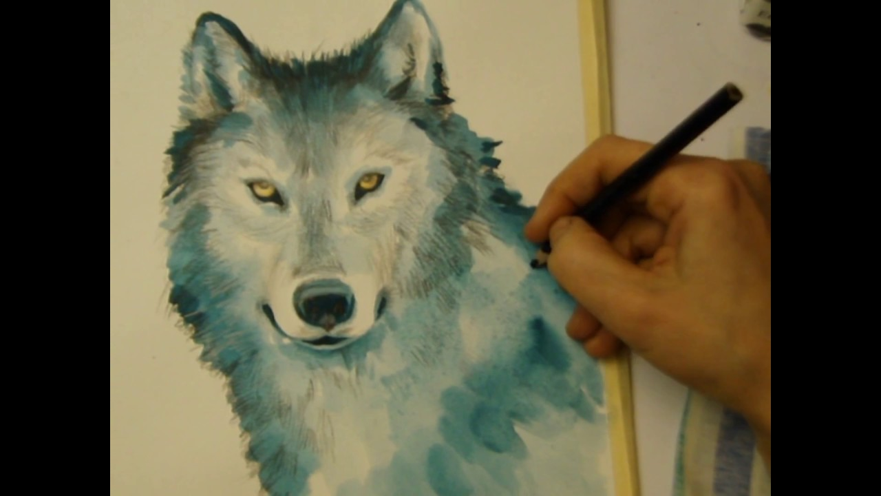 How to draw a wolf pencils watercolor for Lupo disegno a matita