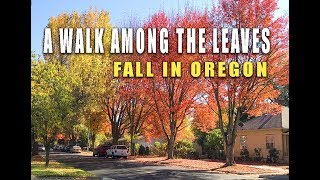 FALL COLORS: A colorful Oregon Day (RV life, RV living)