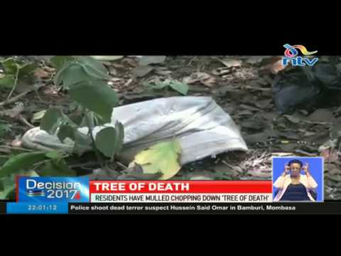 'Tree of Death' in Nyeri where many have committed suicide