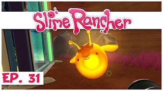 Welcome to slime rancher! in part 31 of our rancher series, we turn all honey into largo hybrids so can vote on them! ► watch the entire s...