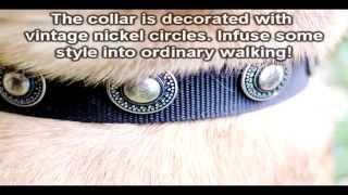Designer Nylon Dog Collar With Silver Conchos