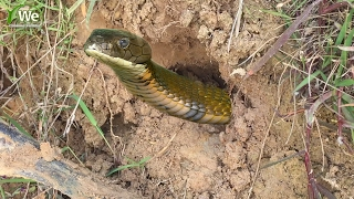 We Survival - Catching Snake From Crab Hole