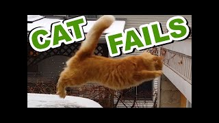 EPIC CAT FAILS ★ Try Not to Laugh! HD Epic Laughs