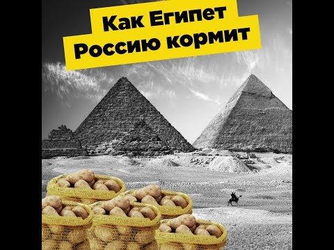Почему большая Россия покупает картофель в маленьком Египте?