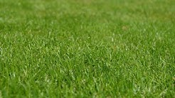Free Lawn Images with CC0 licenses with no attribution required for Commercial Use