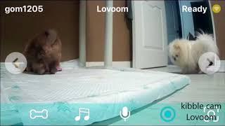 Best interactive pet camera | Dog reaction #12 | pet gadget