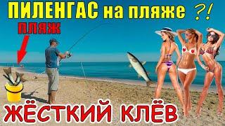 РЫБАЛКА НА ПЛЯЖЕ ЖОР ПЕЛЕНГАСА ловля в Азовском море Арабатская Стрелка Стрелковое Пеленгас