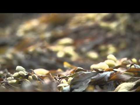 Peinture naturelle aux algues