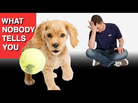What Nobody Tells You About Having a Puppy