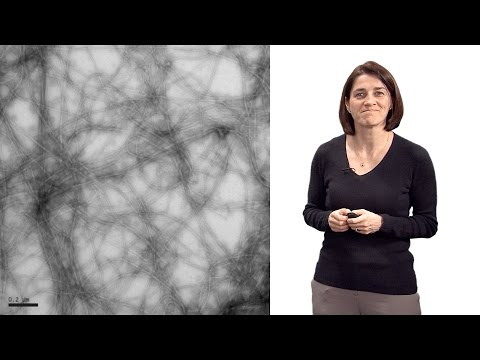Christine Jacobs-Wagner (Yale, HHMI) 1: The role of spatial organization in bacterial cell function
