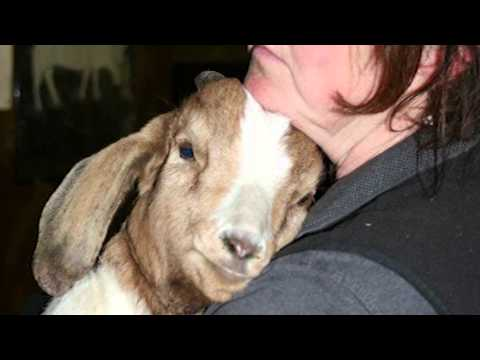 Catskill Animal Sanctuary  Staff Stars Kathy and Jenn