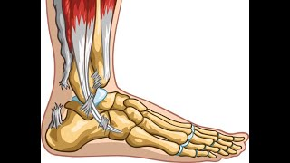127 Effects of Collagen on Relative Strength of Achilles Tendon Engineered Tissue Constructs