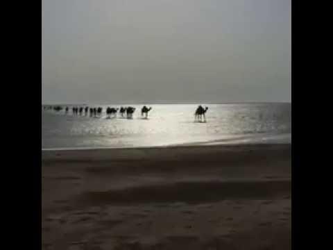 """فيديو: مشهد خيالي لمجموعة من """"الإبل"""" وهي تعبر البحر"""