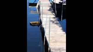 Mid-West Wildlife - Wildlife On The Lake