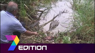 Missing Reptile | 'Mamat The Crocodile' Becomes A Tourist Attraction